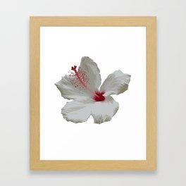 Pure White Hibiscus Tropical Flower Framed Art Print