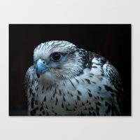falcon Canvas Prints featuring falcon by Jo Beerens