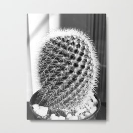 closeup cactus texture with morning sunlight in black and white Metal Print