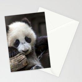 Baby panda climb a tree Stationery Cards