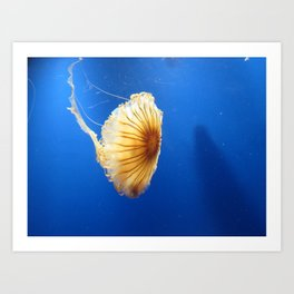 Jellyfish 2 Art Print