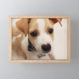 Sweet Pup Framed Mini Art Print
