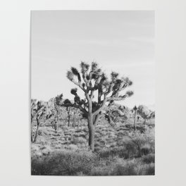 Large Joshua Tree in Black and White Poster