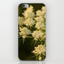 Queen Anne's Lace Flower iPhone Skin