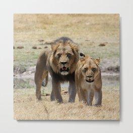 Lion_20180704_by_JAMFoto Metal Print