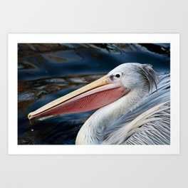 Pink Backed Pelican Art Print