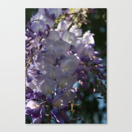 Wisteria Sunlight and Shadows Canvas Print