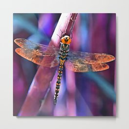 Dragonfly In Orange and Blue Metal Print