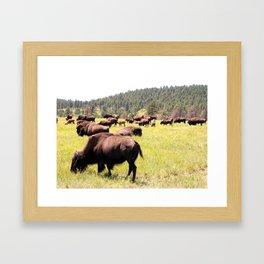 Wide Open Pastures Framed Art Print