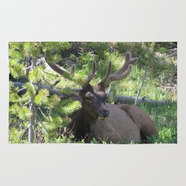 Buck Elk Deer With Velvet Horns at Yellowstone National Park Rug