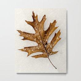 a leaf in the snow Metal Print