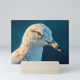 Seagull's Portrait. Nature Photography  Mini Art Print
