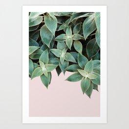 #leaf #wall #pink Art Print