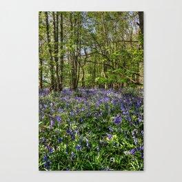 Bluebells Everdon Stubbs Wood Canvas Print