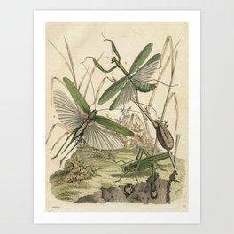 Grasshopper & Mantis Art Print