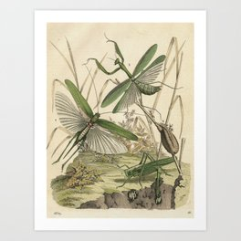 Grasshopper & Mantis Art Print