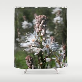 Drimia Maritima Shower Curtain