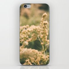 Godenrod iPhone & iPod Skin