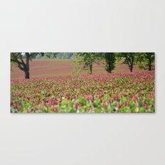Clover Fields Canvas Print