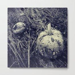 Gourds Metal Print