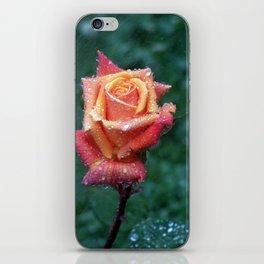 Rainy rose iPhone Skin