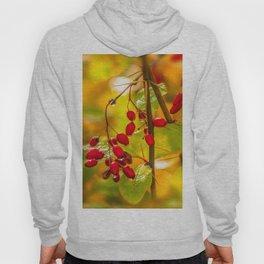 Autumn drops Hoody