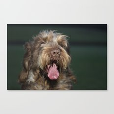 Brown Roan Italian Spinone Dog Head Shot Canvas Print