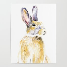 Hare Bunny Poster
