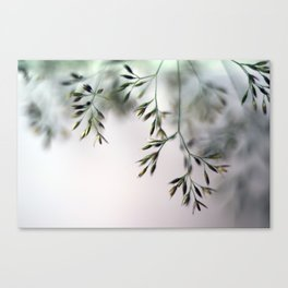 macro grass Canvas Print