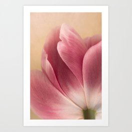 The Tulip Art Print