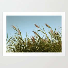August Breeze #5 - Modern Nature Photograph Art Print