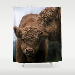 Scottish Highland Cattle Calves - Babies playing Shower Curtain