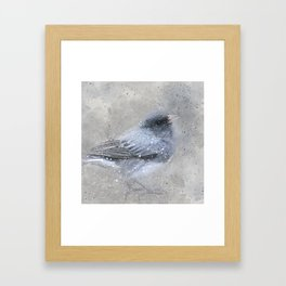 Dark Eyed Junco Bird Framed Art Print