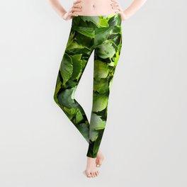green summer Leggings