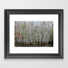 Autumn In The Everglades Framed Art Print