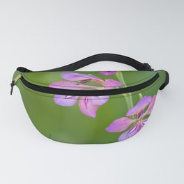 Beauty in nature, wildflower Gladiolus illyricus Fanny Pack