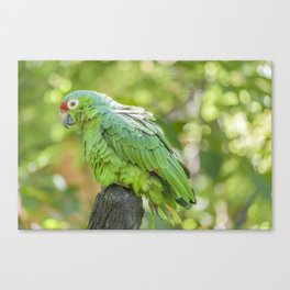 Tropical Parrot at Zoo, Guayaquil Canvas Print