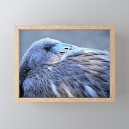 Young Flamingo Feathers by Reay of Light Framed Mini Art Print