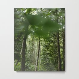 Beautiful Forests on Vancouver Island in Canada Metal Print