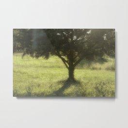 Evening Sunlight Metal Print