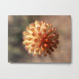 Flower Pre-Bloom Metal Print