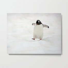 Gentoo Penguin on a Fishing Expedition Metal Print