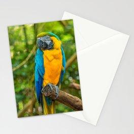 Majestic Macaw Stationery Cards