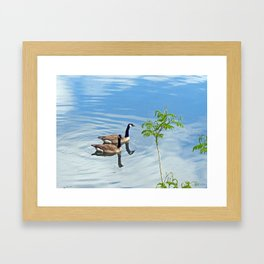 Enjoying a Swim Framed Art Print
