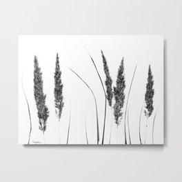Calamagrostis Stricta Metal Print