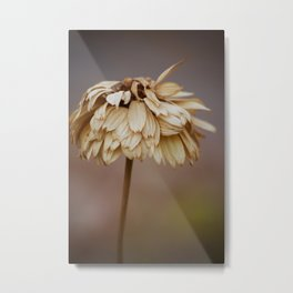 Sunny Days are Past Metal Print