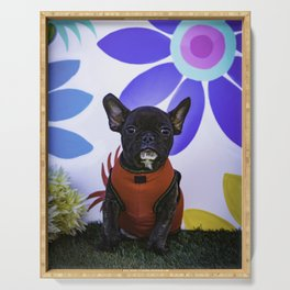 Black French Bulldog Wearing a Red Sweater Sits in front of a Spring Floral Background Serving Tray