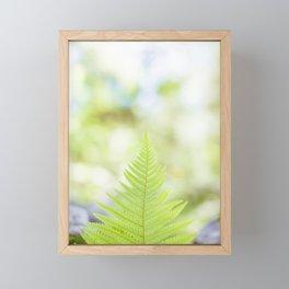 Polypodiopsida Framed Mini Art Print