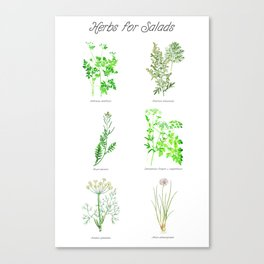 Herbs for Salads Canvas Print