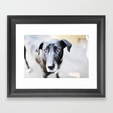 puppy eyes Framed Art Print